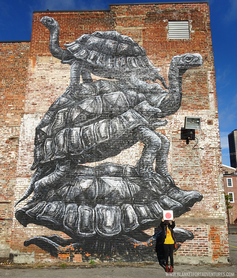 Roa Turtles Richamond VA