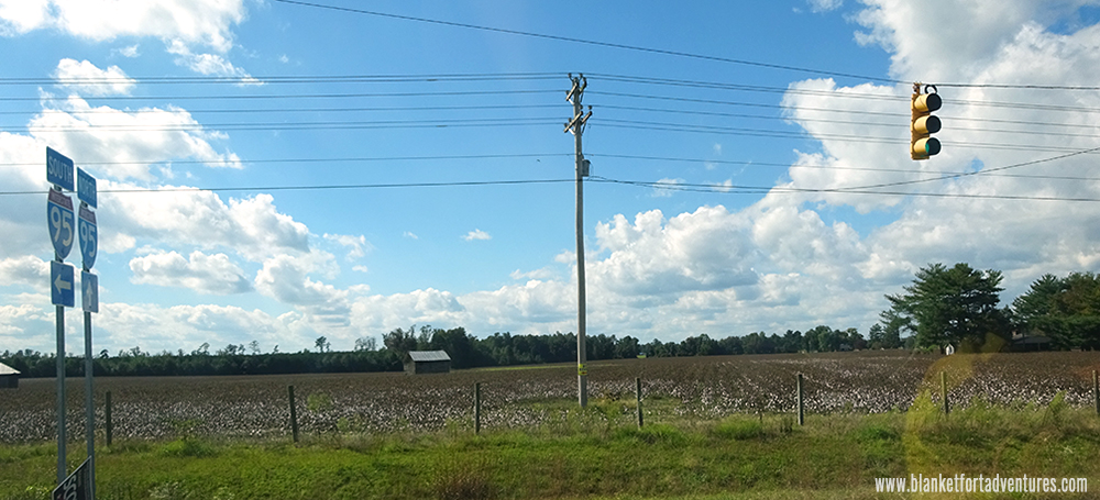 Carolina Cotton Detour Road Trip
