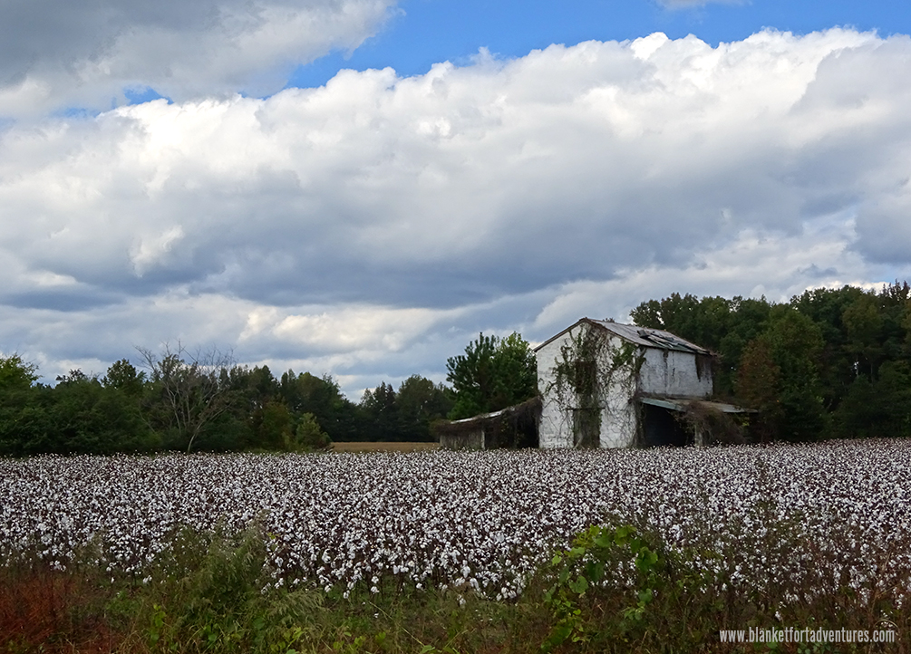 NC : Carolina Cotton Detour