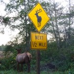 Road Trip Adventure from Nor Cal to Oregon : River Trail & Camping Romance