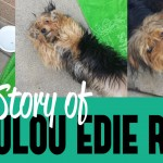 The Story of Loulou Edie Reed – Dog Adoption