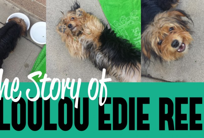 The Story of Loulou Edie Reed
