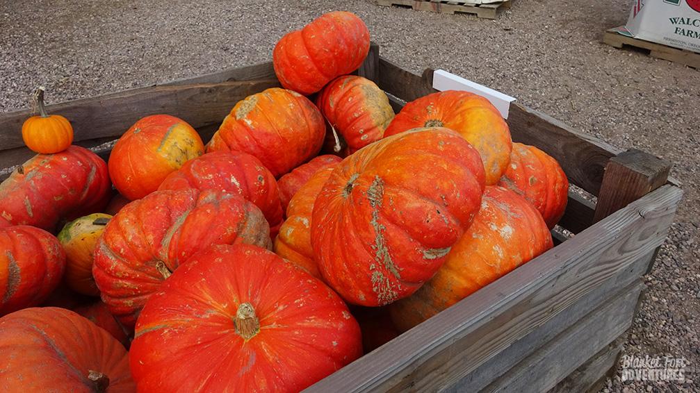 PNW Road Trip _ Pumpkins