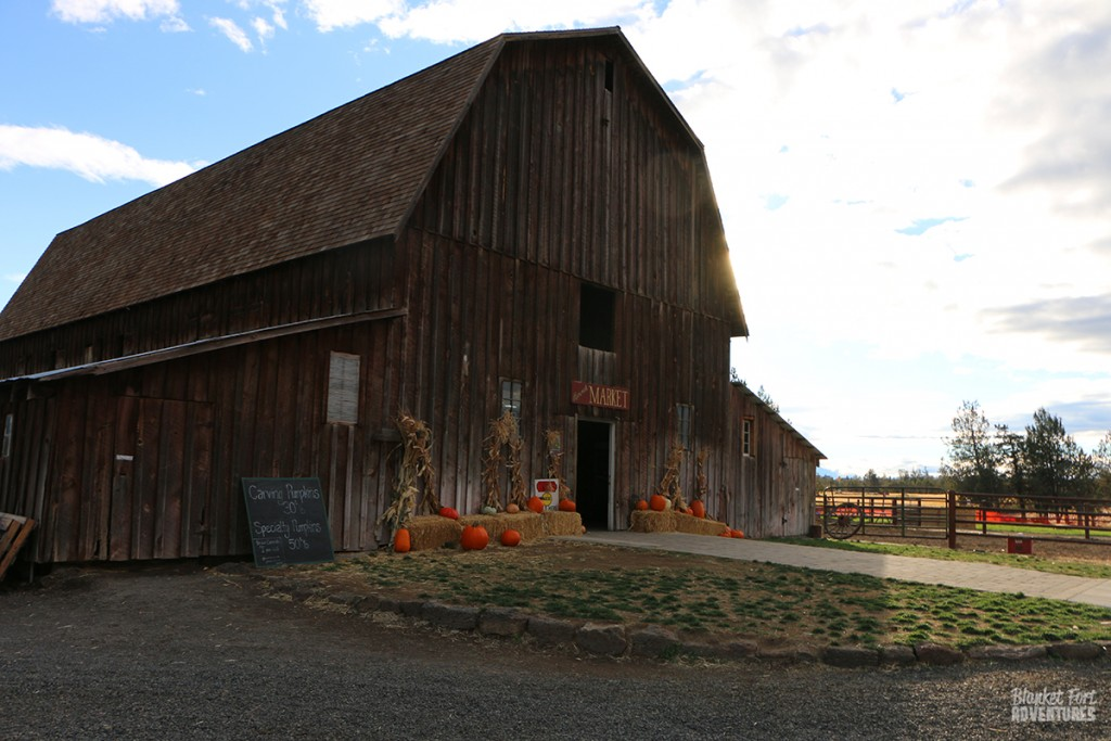 barn at the pumpkin patch